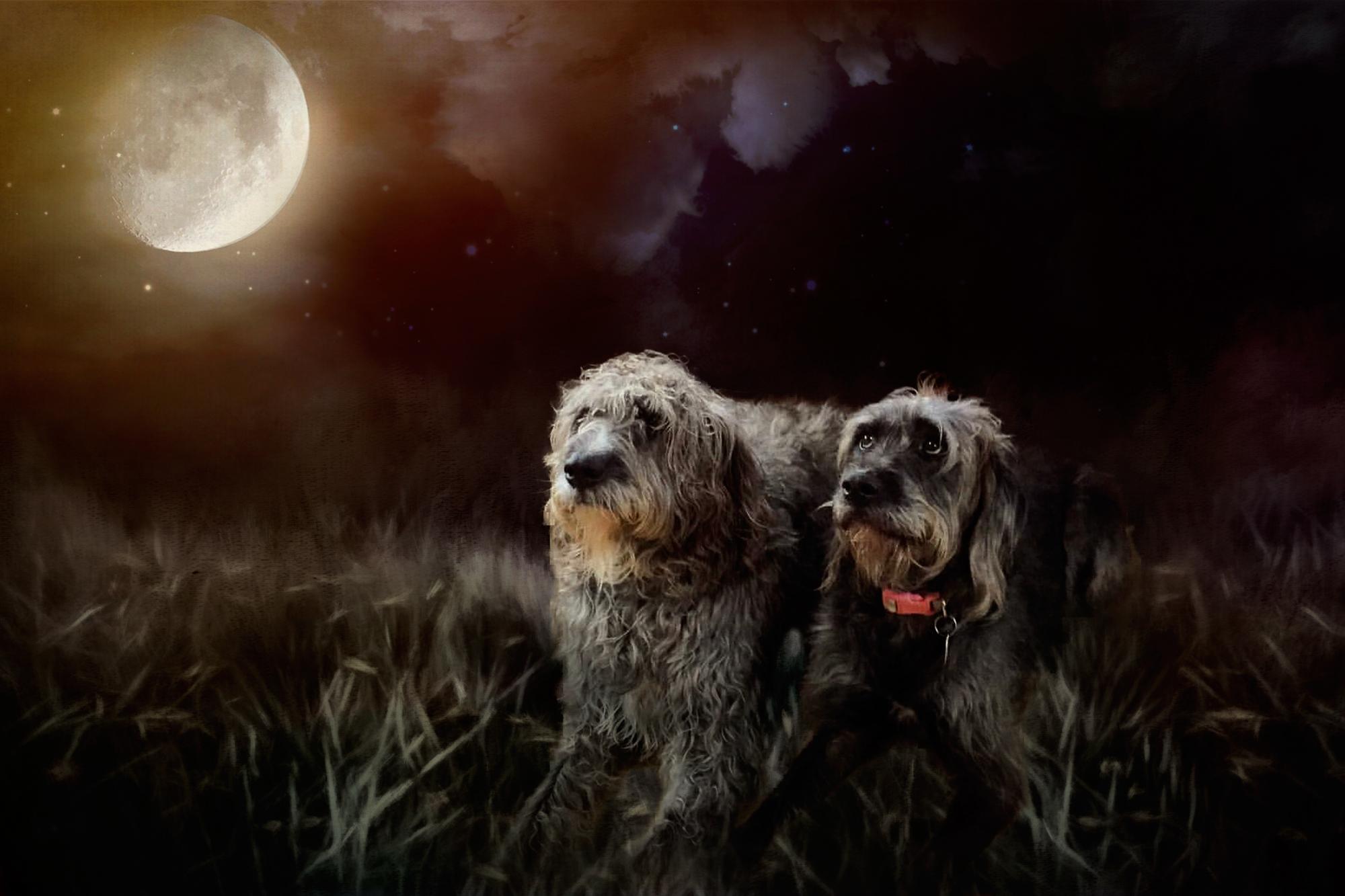Moonlit Doodles-125.jpg