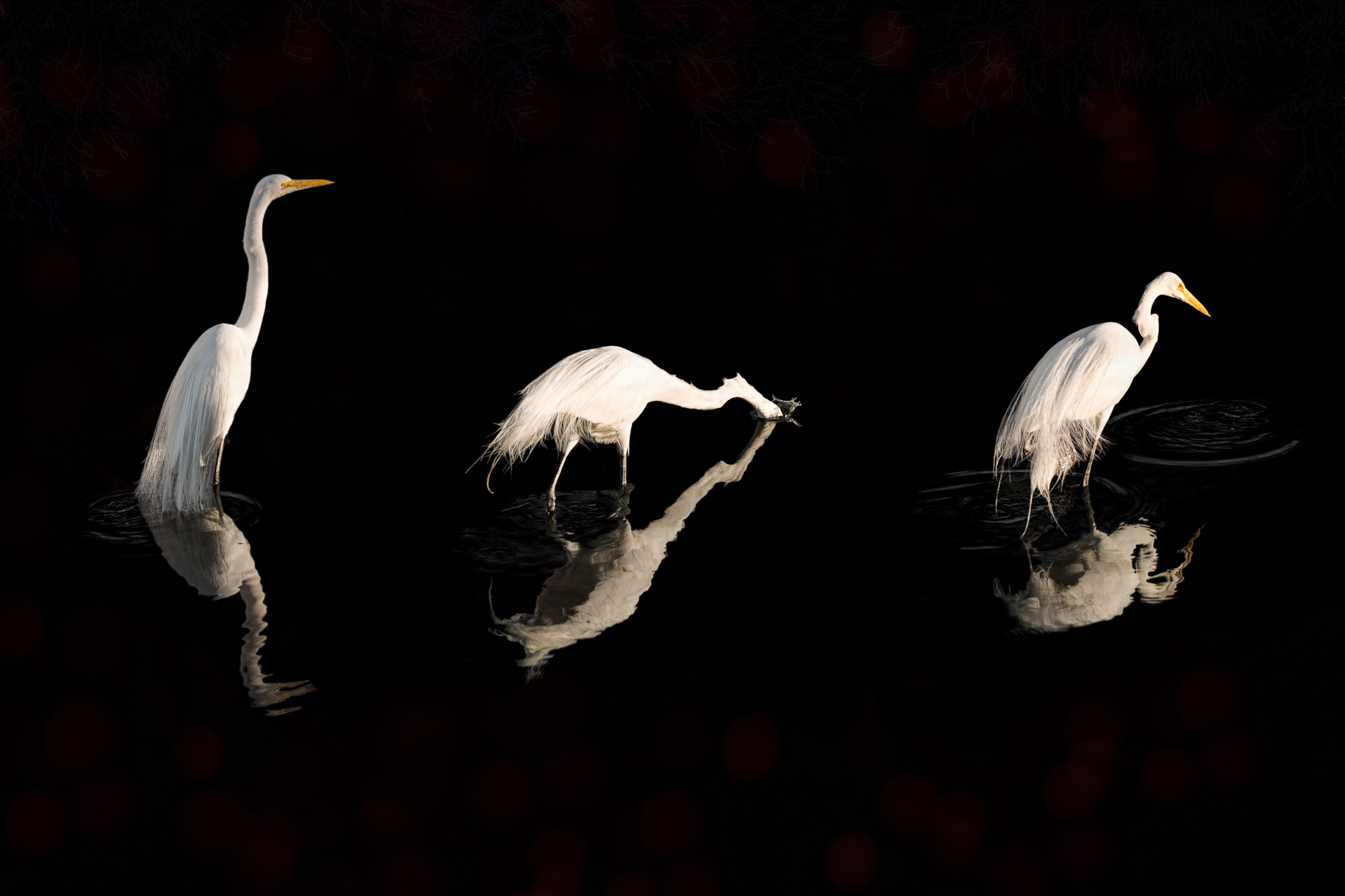 Egrets (series of 3)-166.jpg
