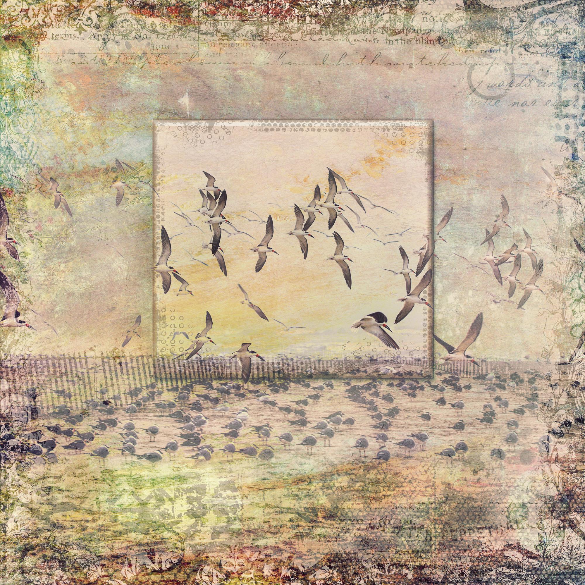 Framed Skimmers-197.jpg