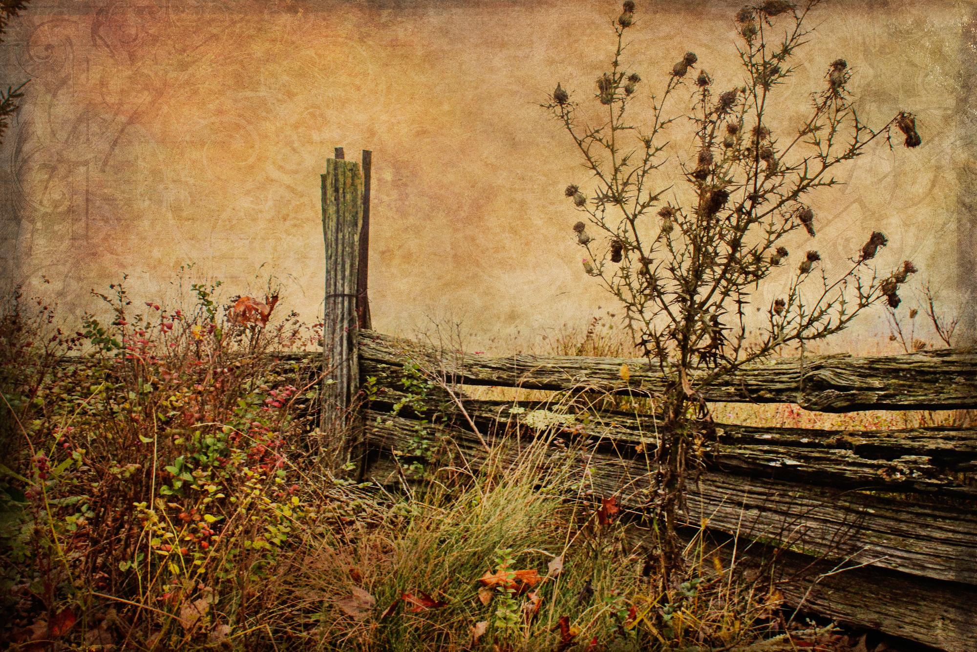Old Fence-1-208.jpg