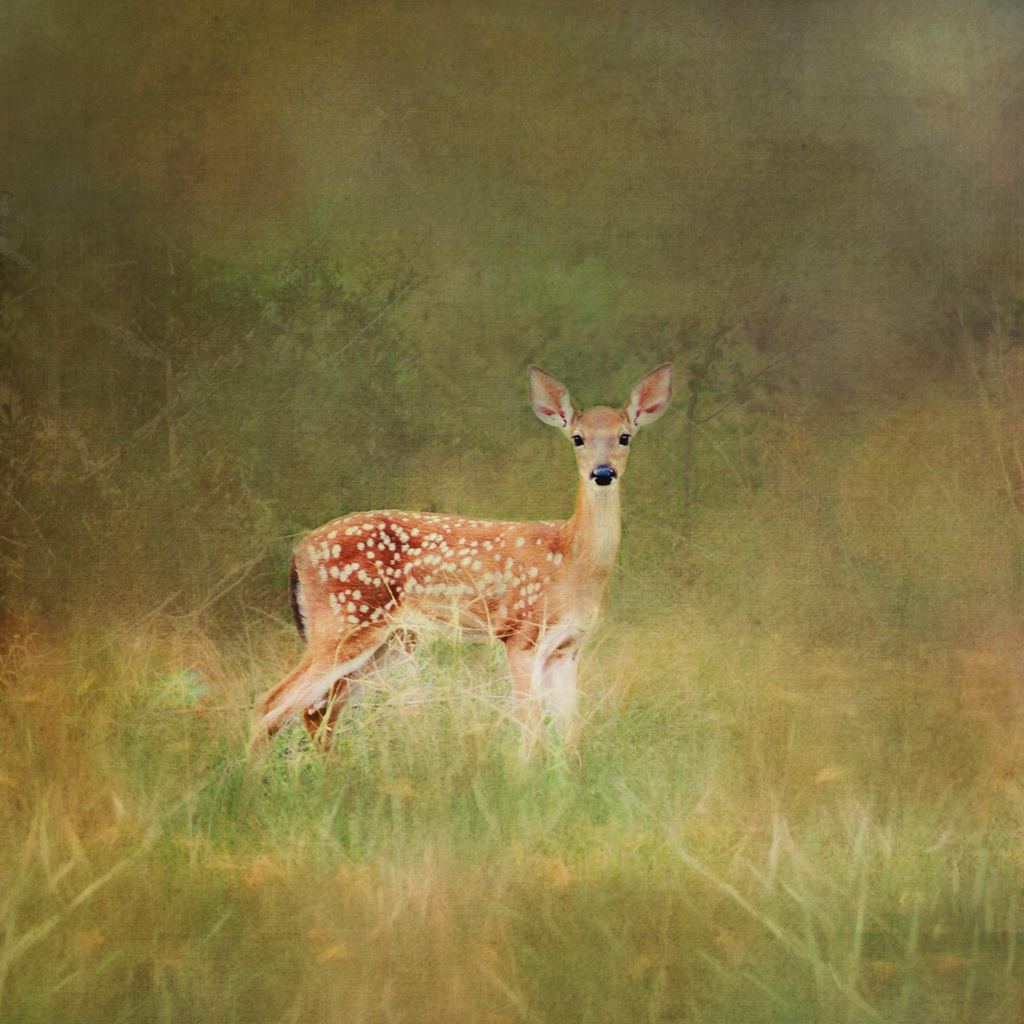 Deer-213.jpg