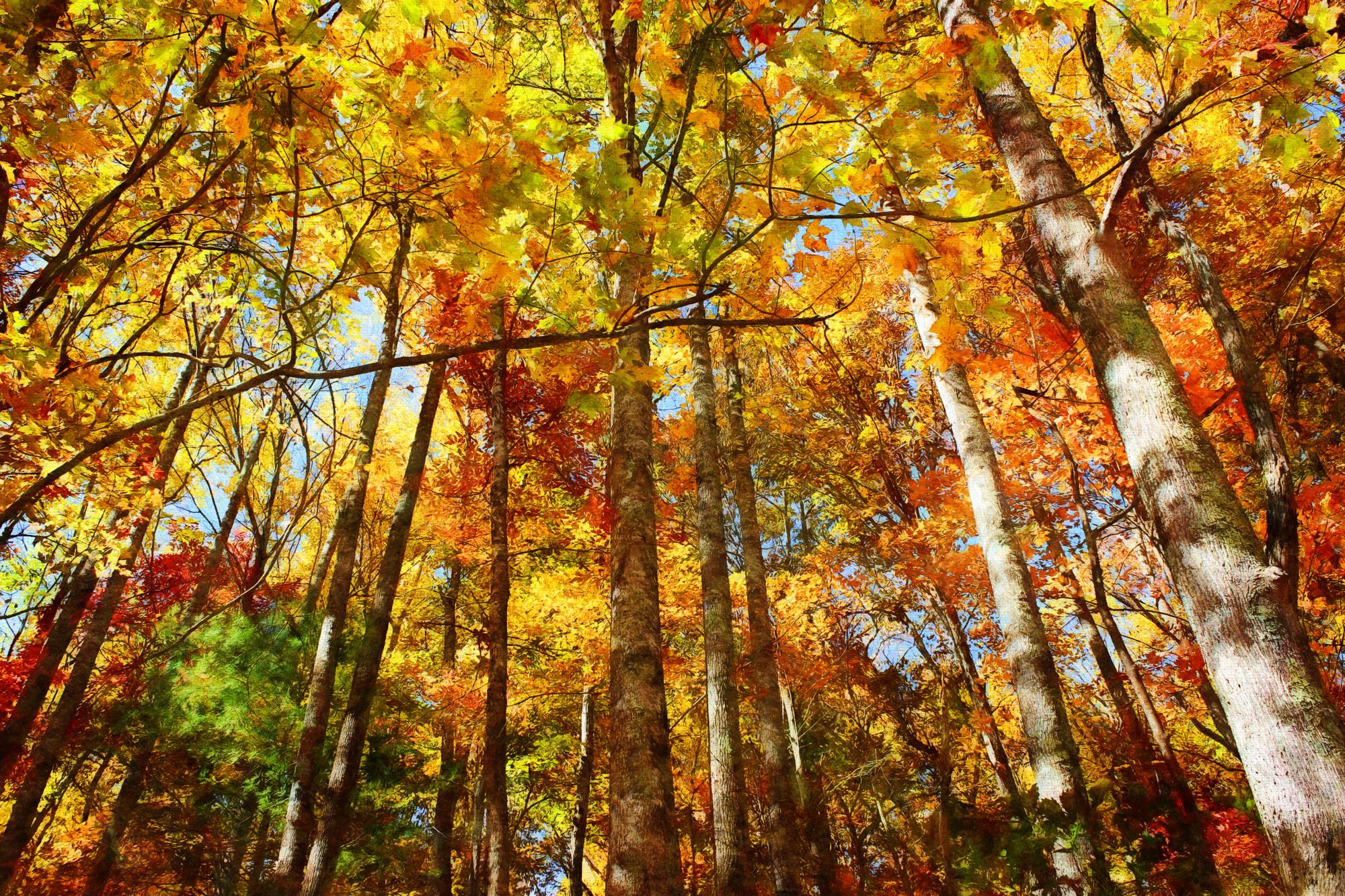 Fall Colors Painted-239.jpg