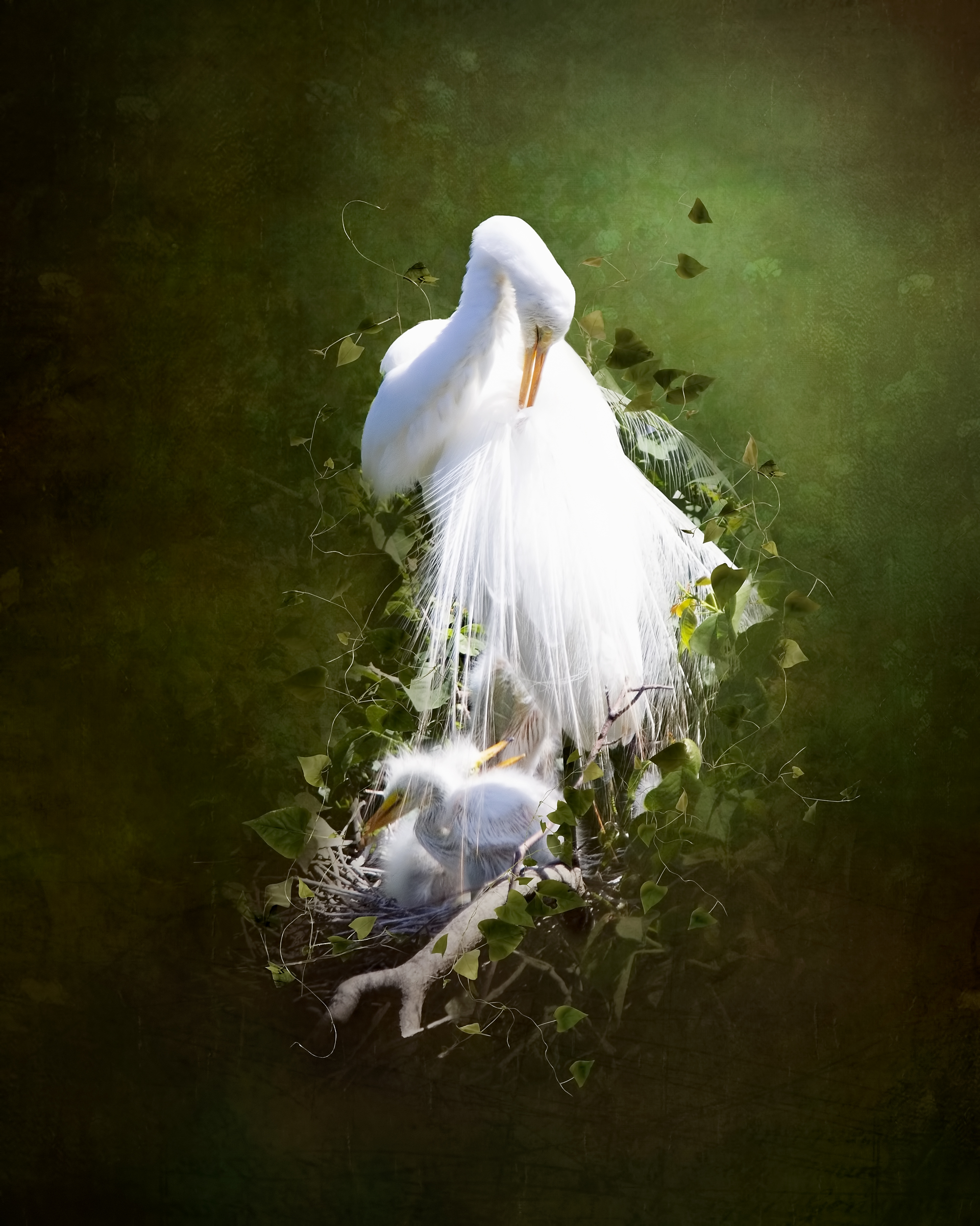 Egret and Babes 2 (small).jpg