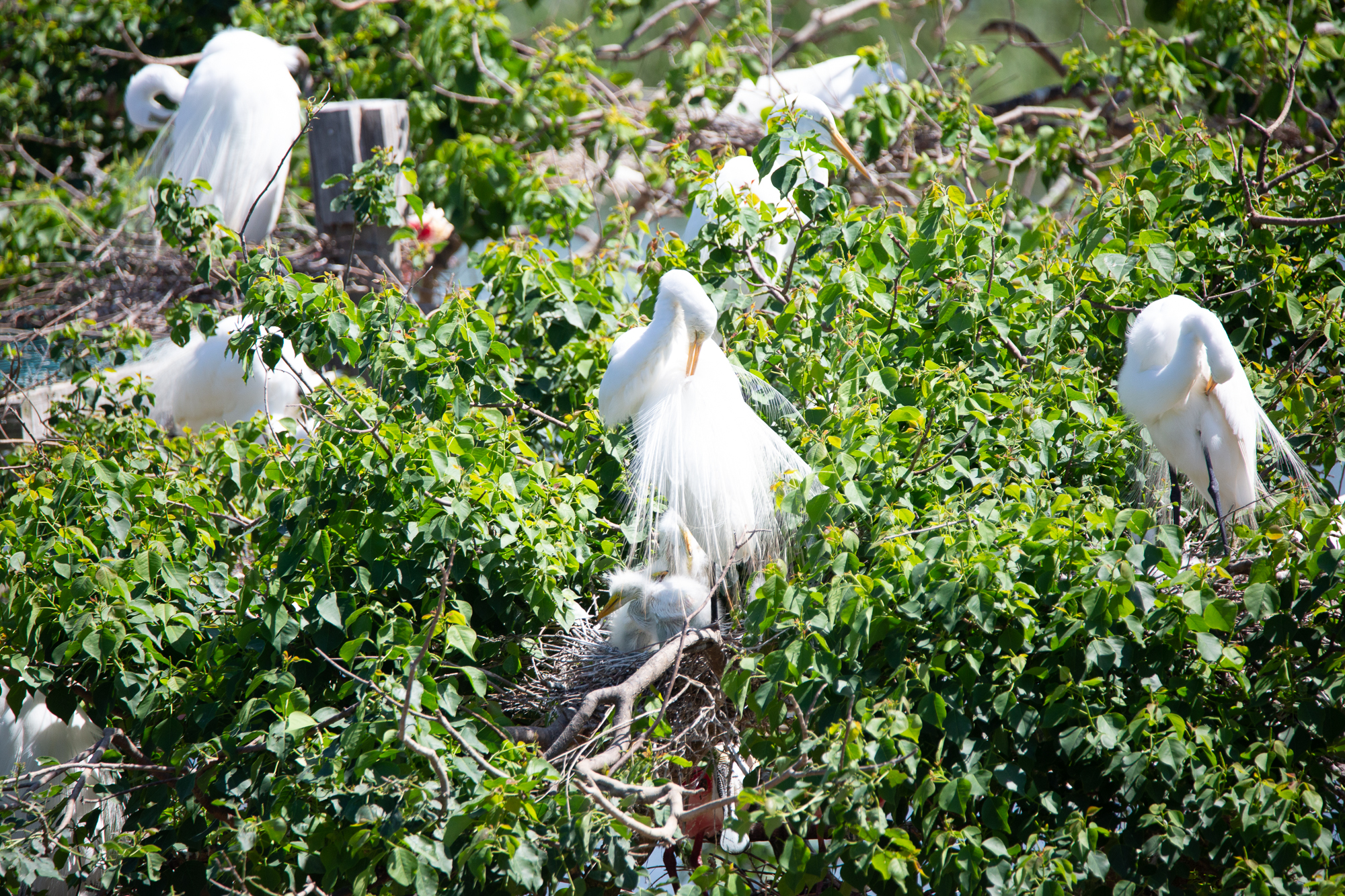 Egret and Babes Original.jpg