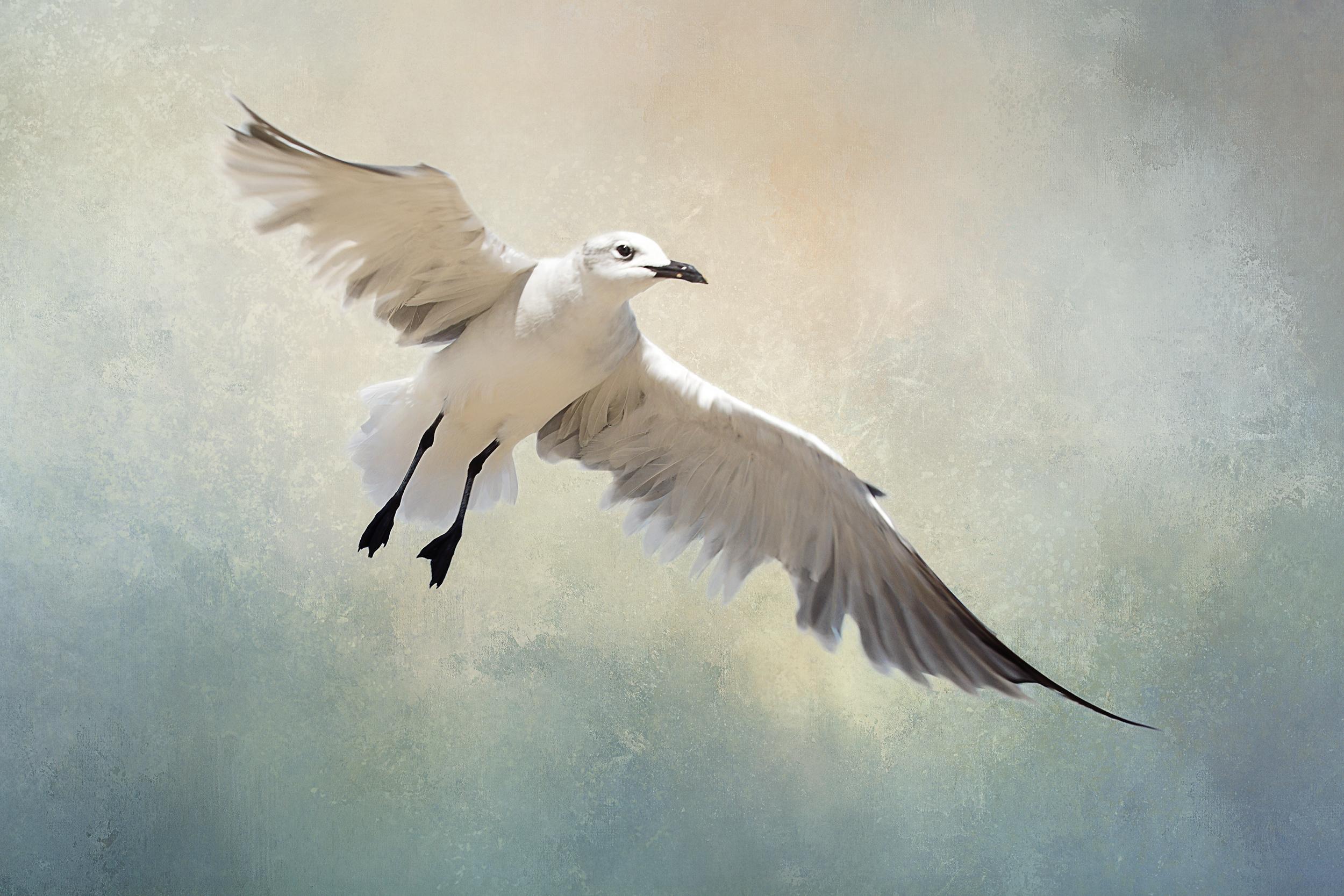 Seagull (small).jpg