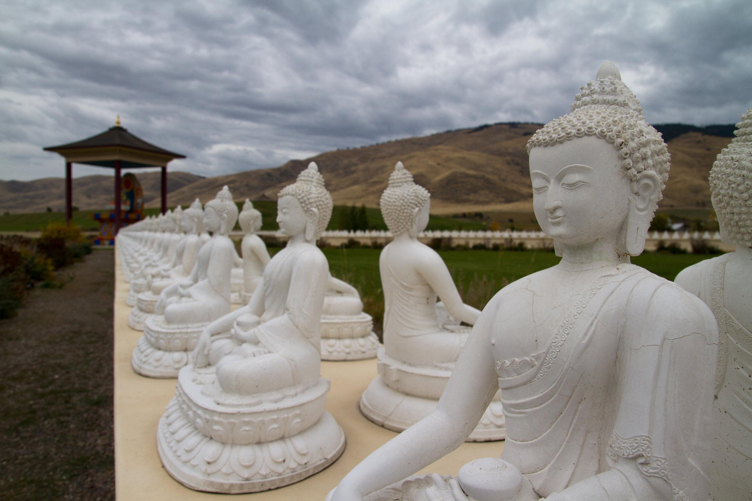 Buddha, Buddha, Buddha Rockin' Everywhere