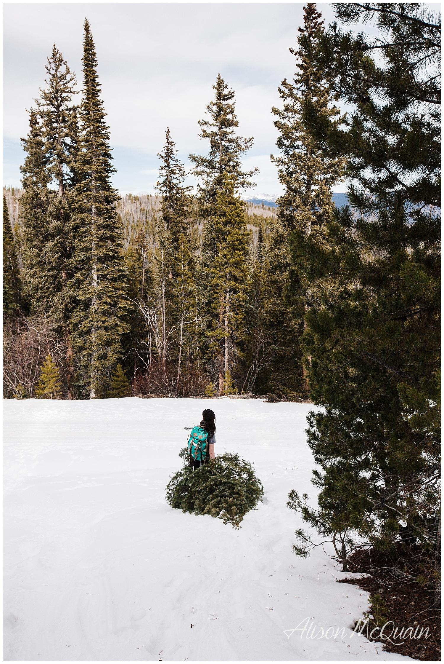 tree_winterpark_17_AMP_0023.jpg