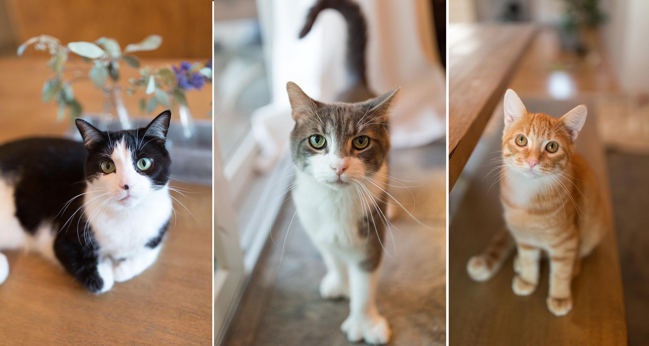3catssmall.jpg