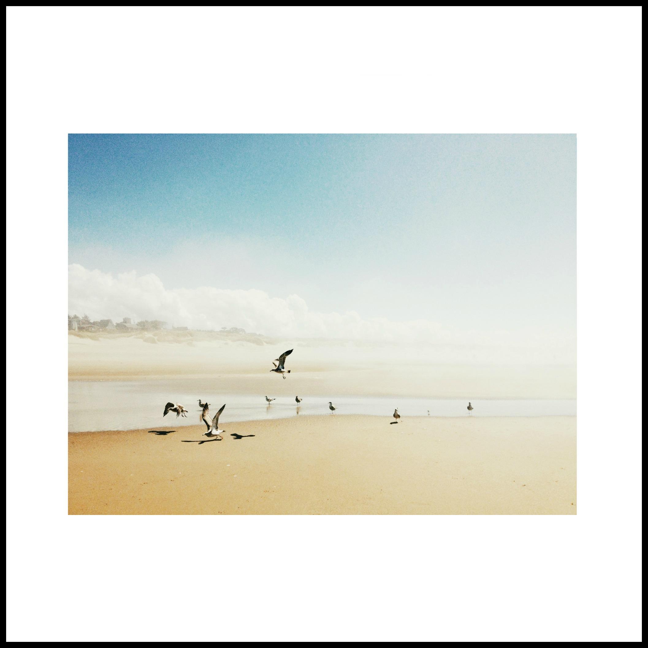 beachbirdsframe.jpg