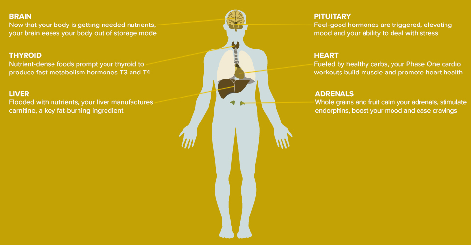 Illustrated Infographics for Random House