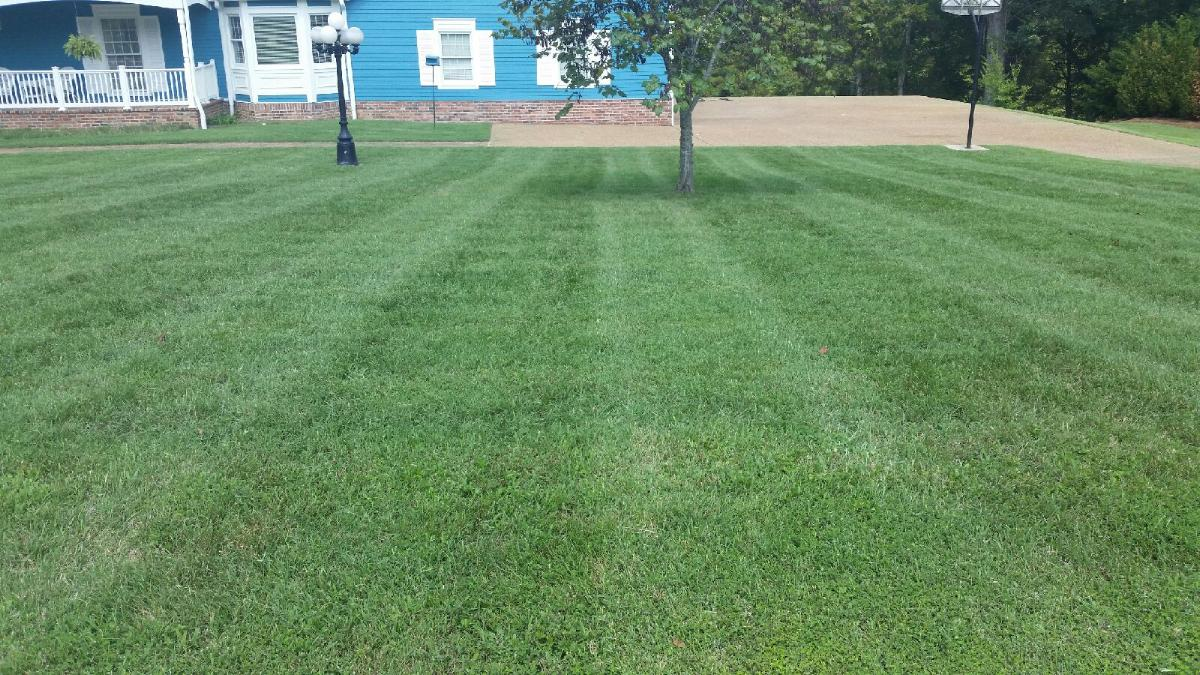 Antonio & Delsy Lawn Care is now offering service in the Sumner County area. You can contact us for your Hendersonville or Gallatin lawn care needs.