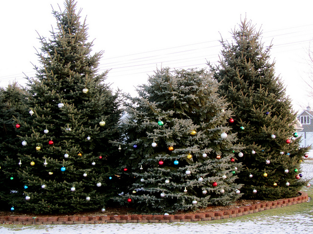 Not in the mood to take down those outdoor decorations? No problem — our professional and fast-working crew will untrim those treesin no time. Photo courtesy Flickr.com