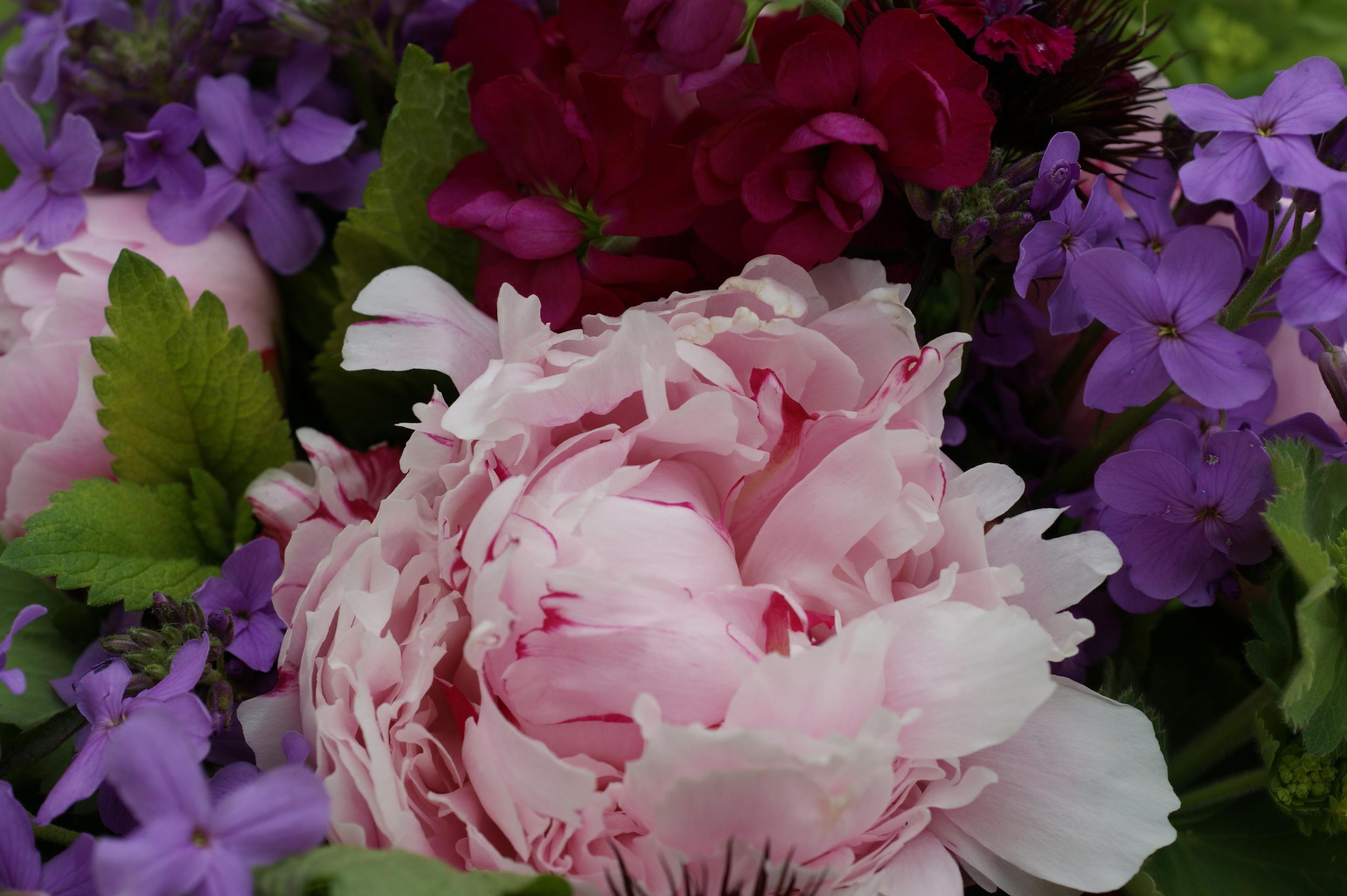 garden and floristry 1 427.JPG