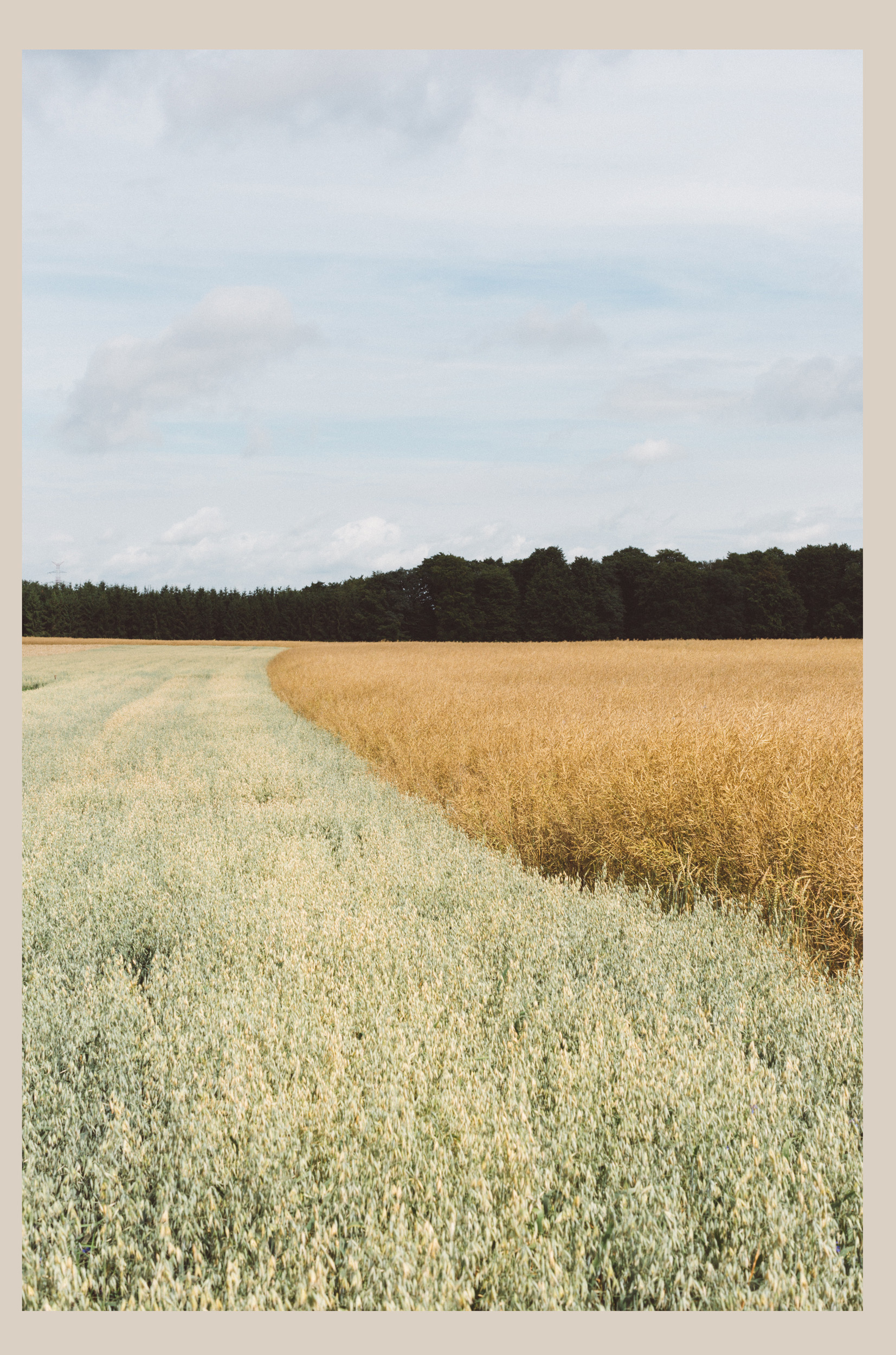 Fields: Shaped Nature -