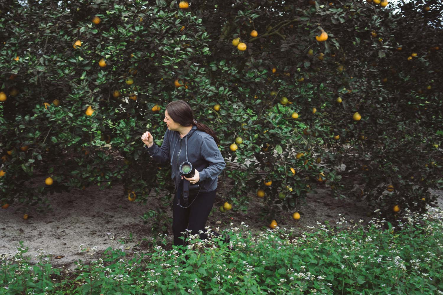 Kristen Penoyer, a Northeast Florida based culinary photographer, shoots in an orange grove in Vero Beach, Florida.