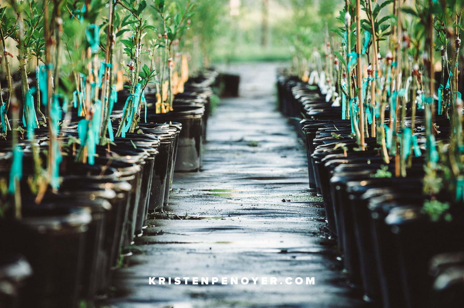 Florida Mayhaw Farm Photography