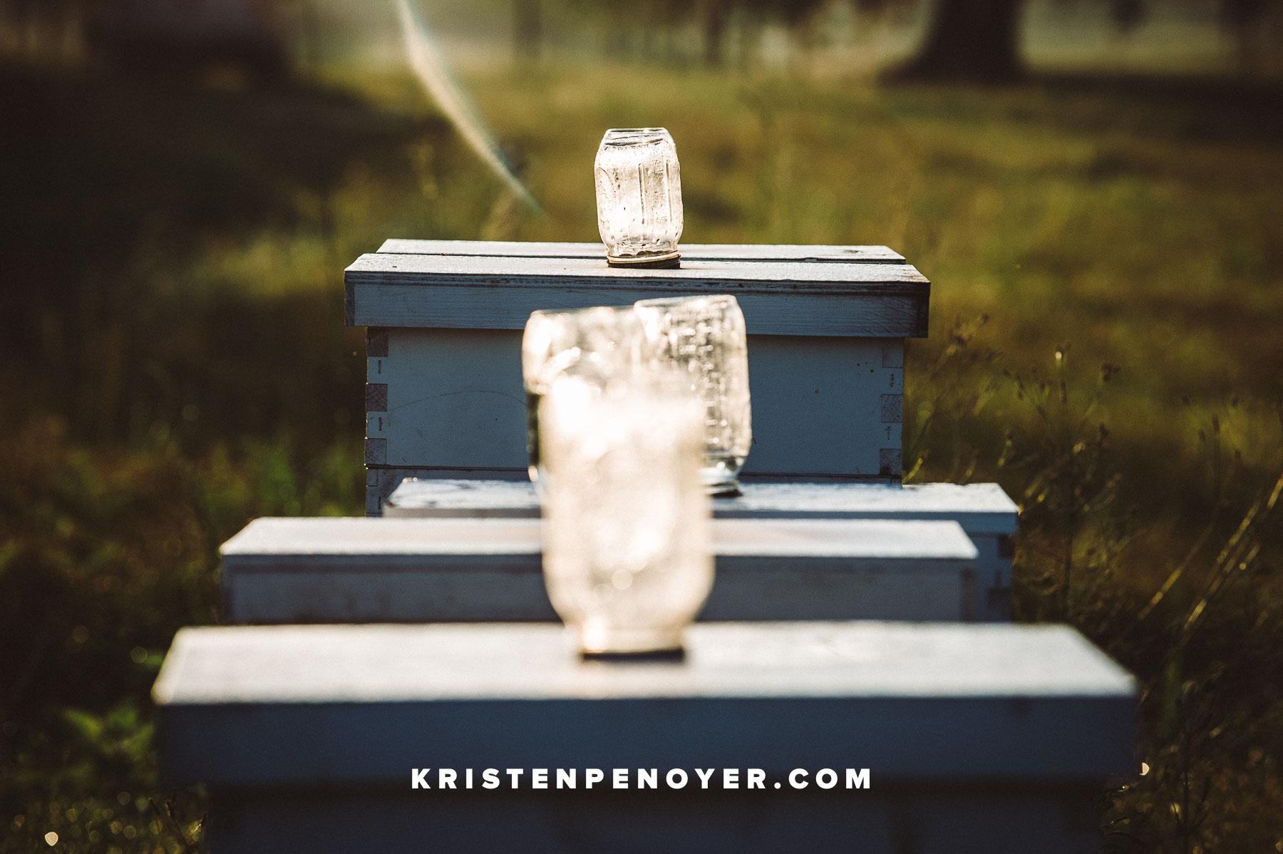 Florida Beekeeping Photography