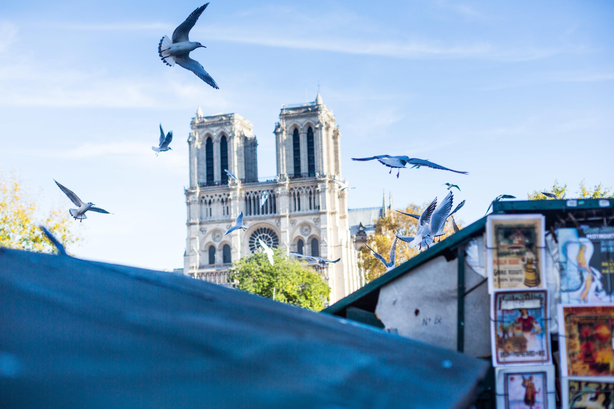 France 2015 - therearmirror.com-12-6.jpg