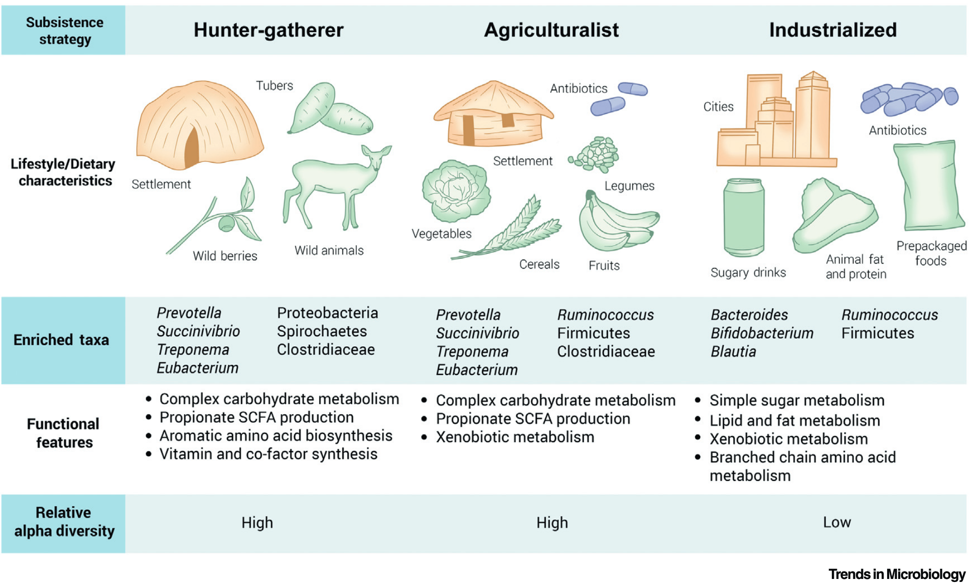 Surveying Gut Microbiome Research in Africans; Brewster, Tamburini, Asiimwe, Oduaran, Hazelhurst & Bhatt, Trends in Microbiology 2019