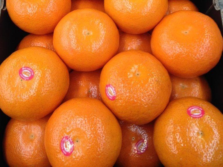 Mad About Murcott Mandarins