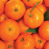 Magnificent Imperial Mandarins