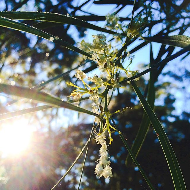 Ahh good morning Sydney #nature #ig #igers #ignature #bushland