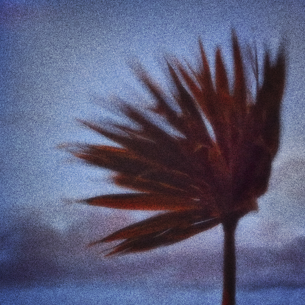 Cyclone in the Wind