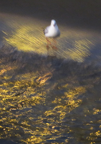 Gull (in gold)
