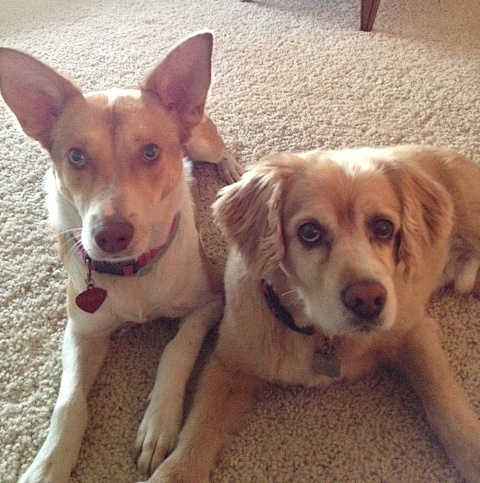 Meet my interns! Penny and Dusty keep me company all day and provide moral support while I work.