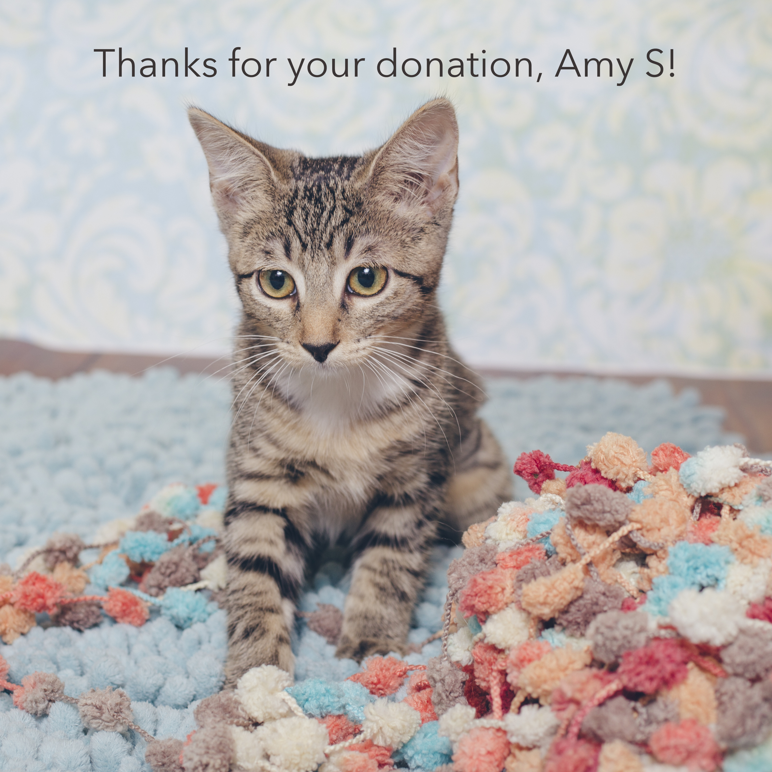 Amy S.jpg