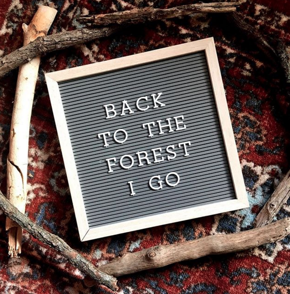 back to the forest i go kateworks kate laing