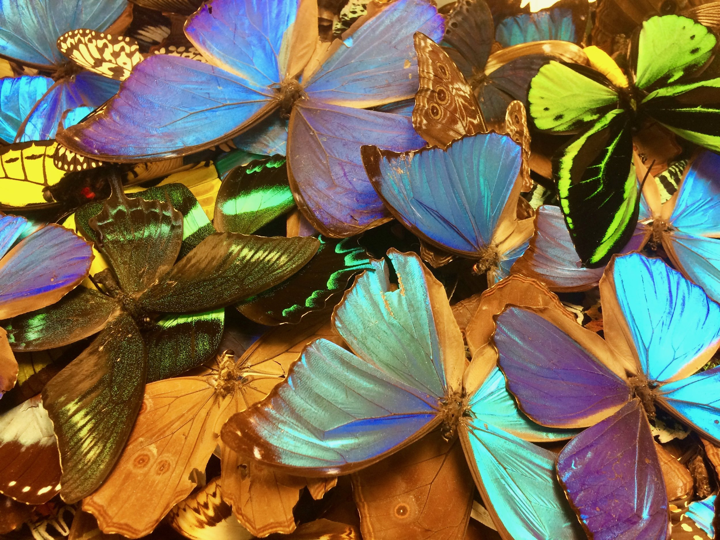 The Key West Butterfly & Nature Conservatory