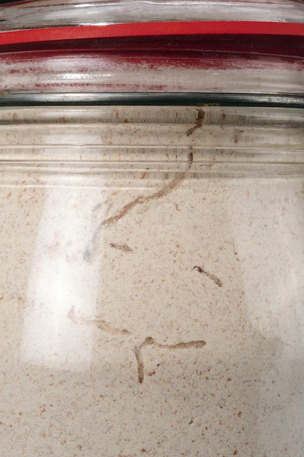 "Pantry moth larvae ""tracks"" in flour jar"