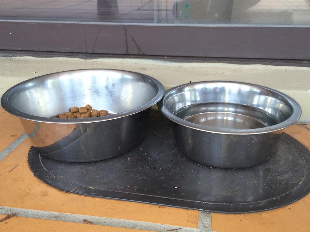 Pet food left out is a big no-no