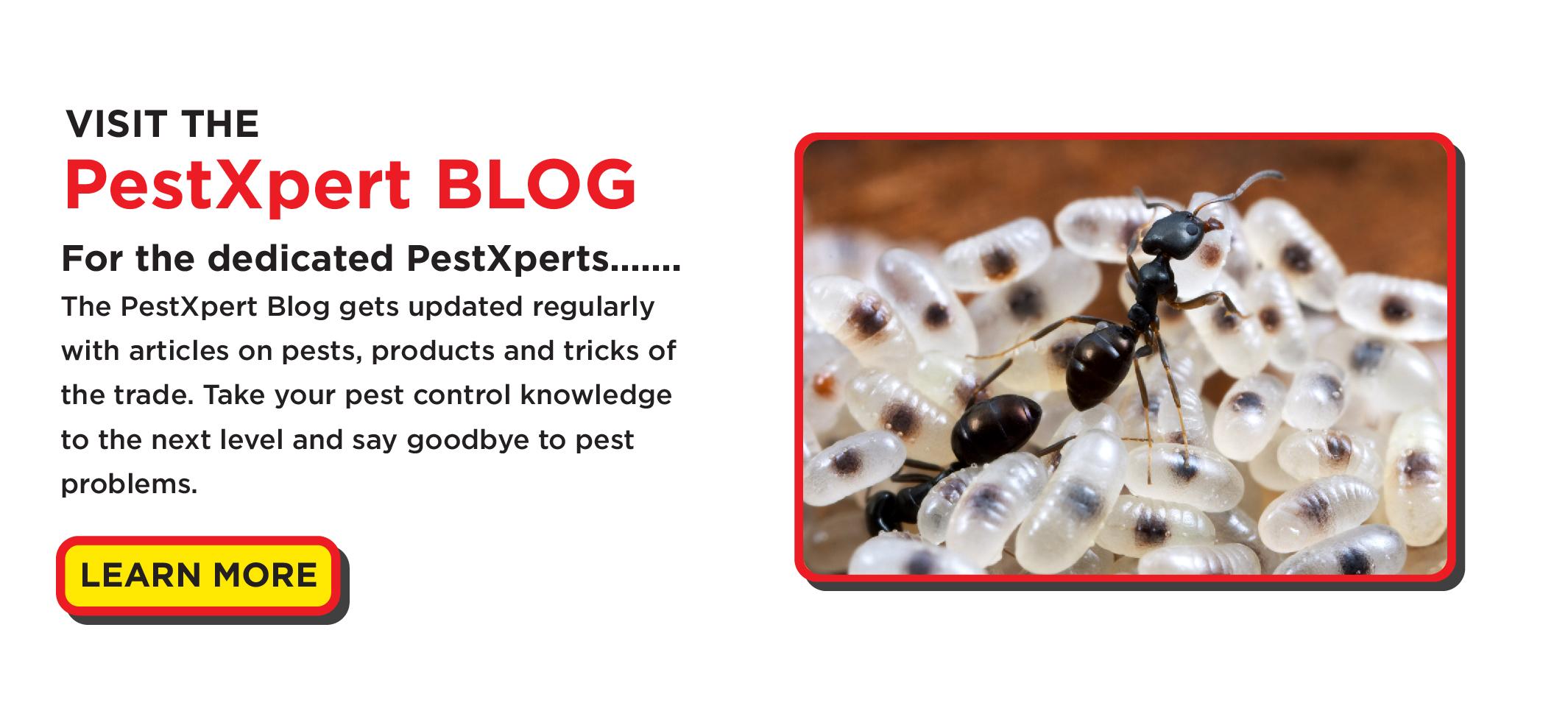 PestXpert Blog