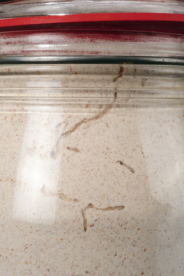 "Larvae tunnels of a pantry moth, in a ""sealed"" flour jar"