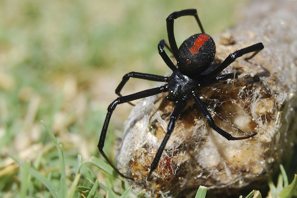 A spring pest spray can be very effective in preventing a spider problem later in the year