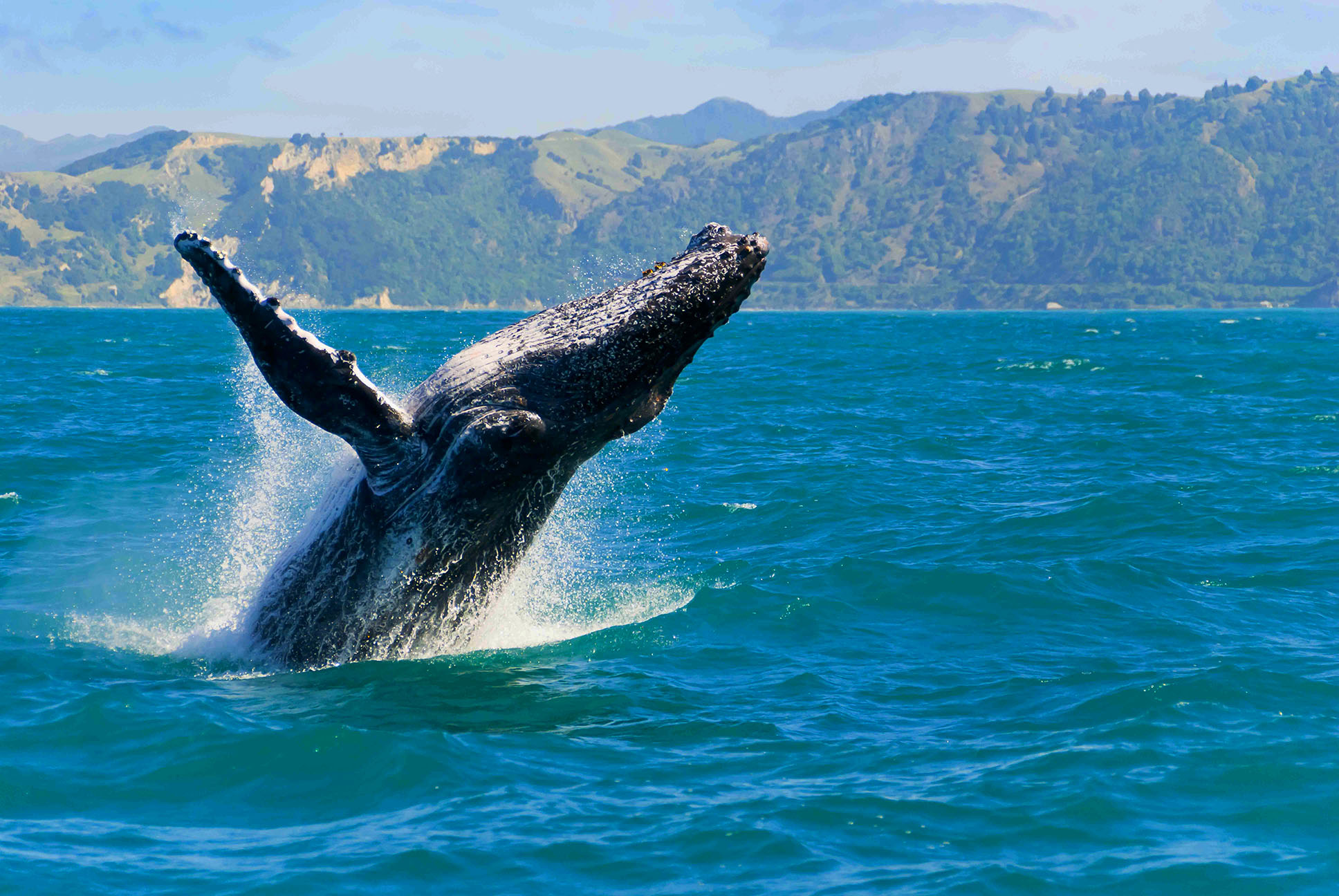WHALE WATCH TOURS