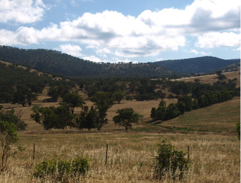 Cooba East Station - looking towards Cooba Mountain
