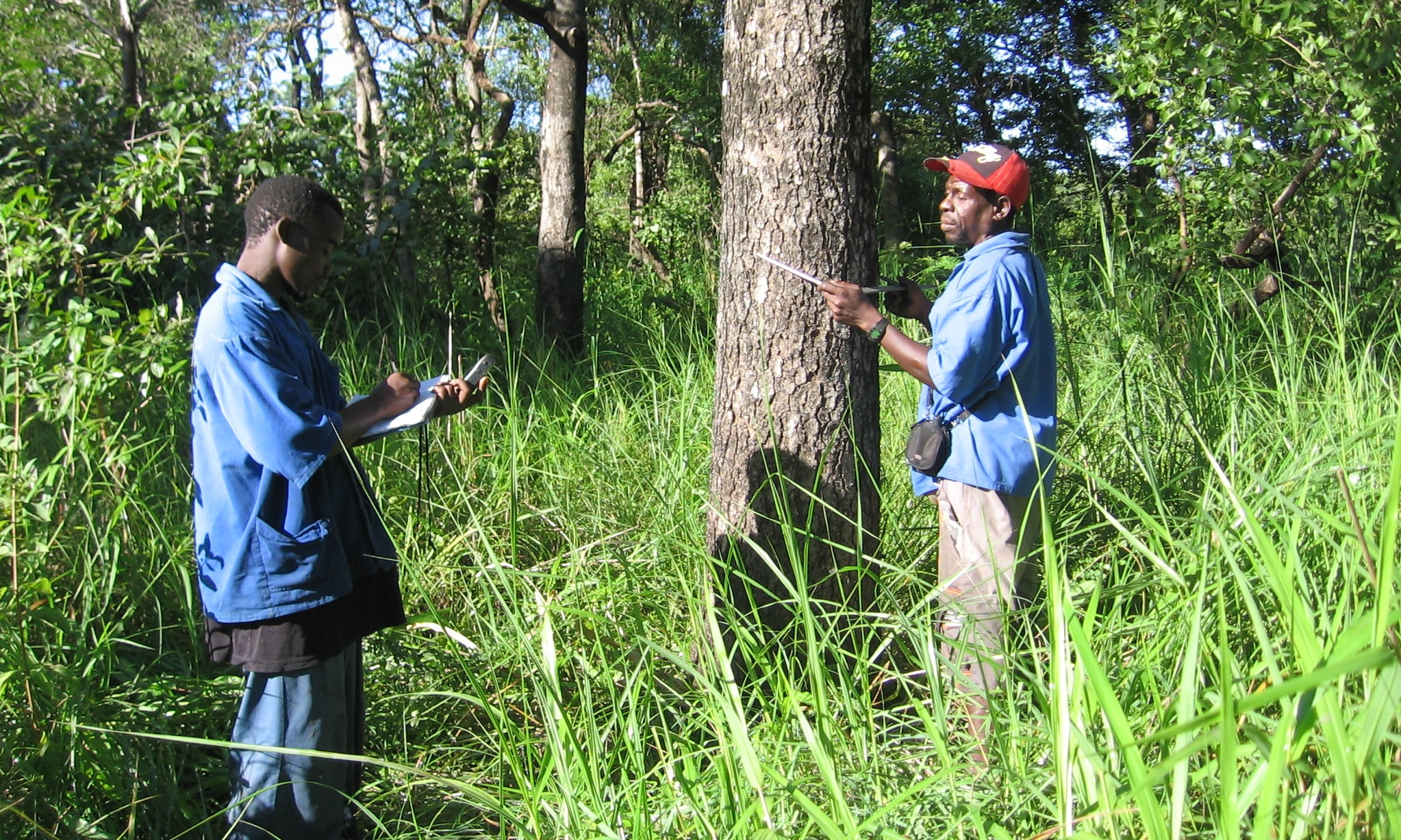 Inventários Florestais detalhados são feitas antes das operações começarem  -  Detailed forestry inventories are conducted prior to operations commencing.