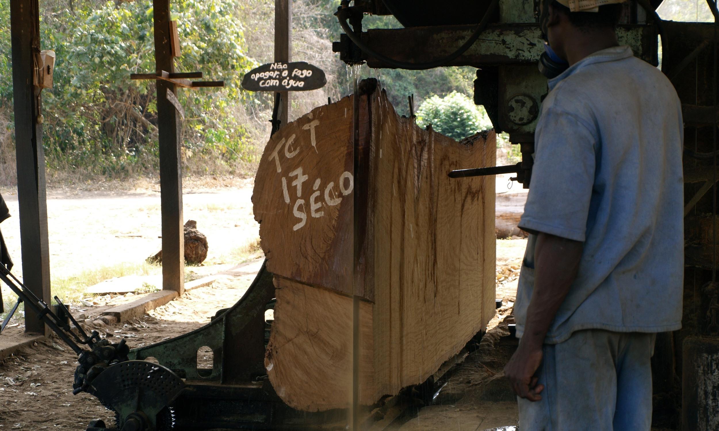 Corte de troncos antigos e abandonados  - Cutting of old abandoned logs