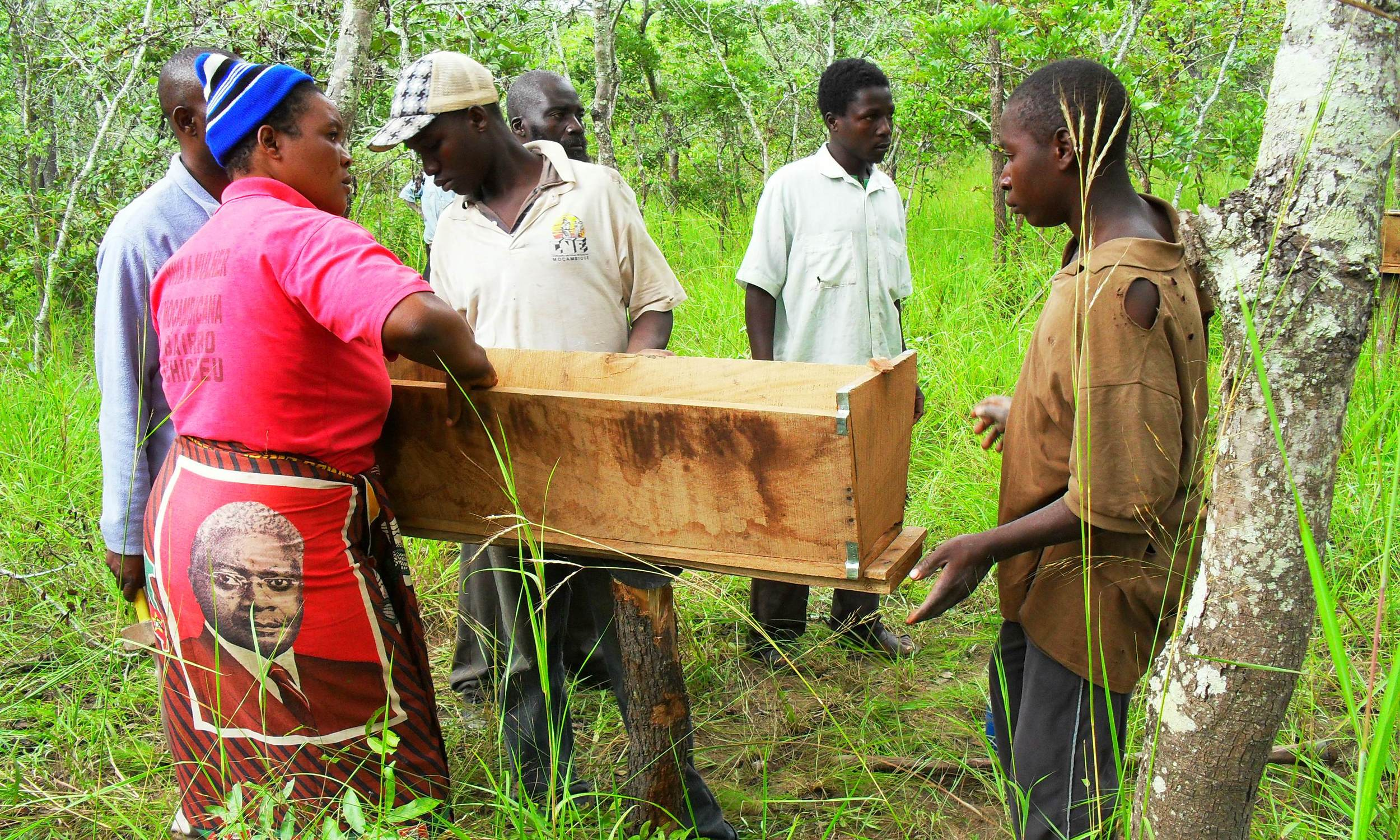 A formação inclui a colocação em campo de colmeias  - Training includes in field placement of hives