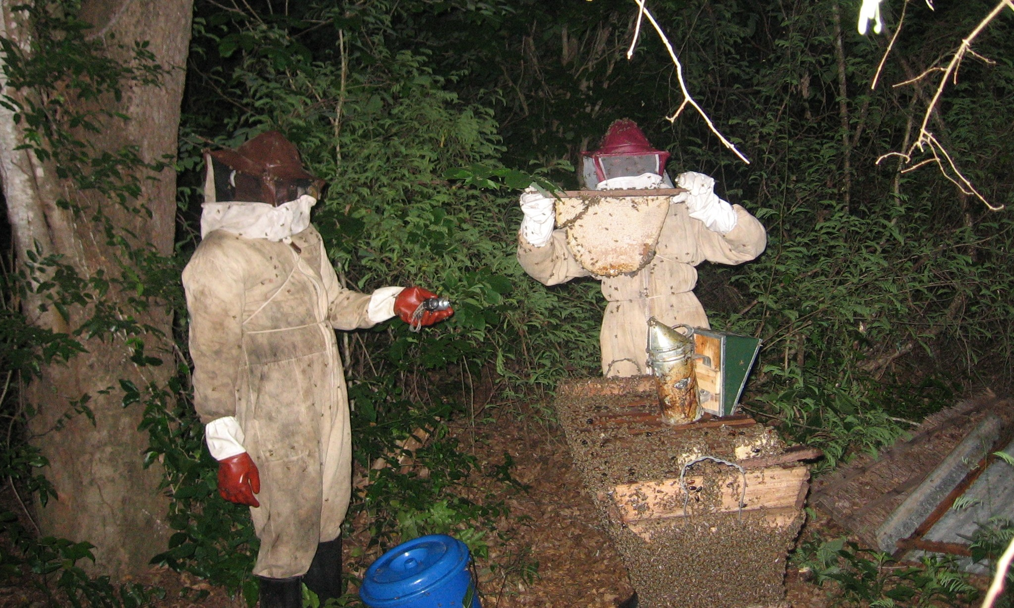 """""""Mãos à obra"""" está incluída a extracção de mel   -Practical """"hands on"""" honey extraction methods are included"""