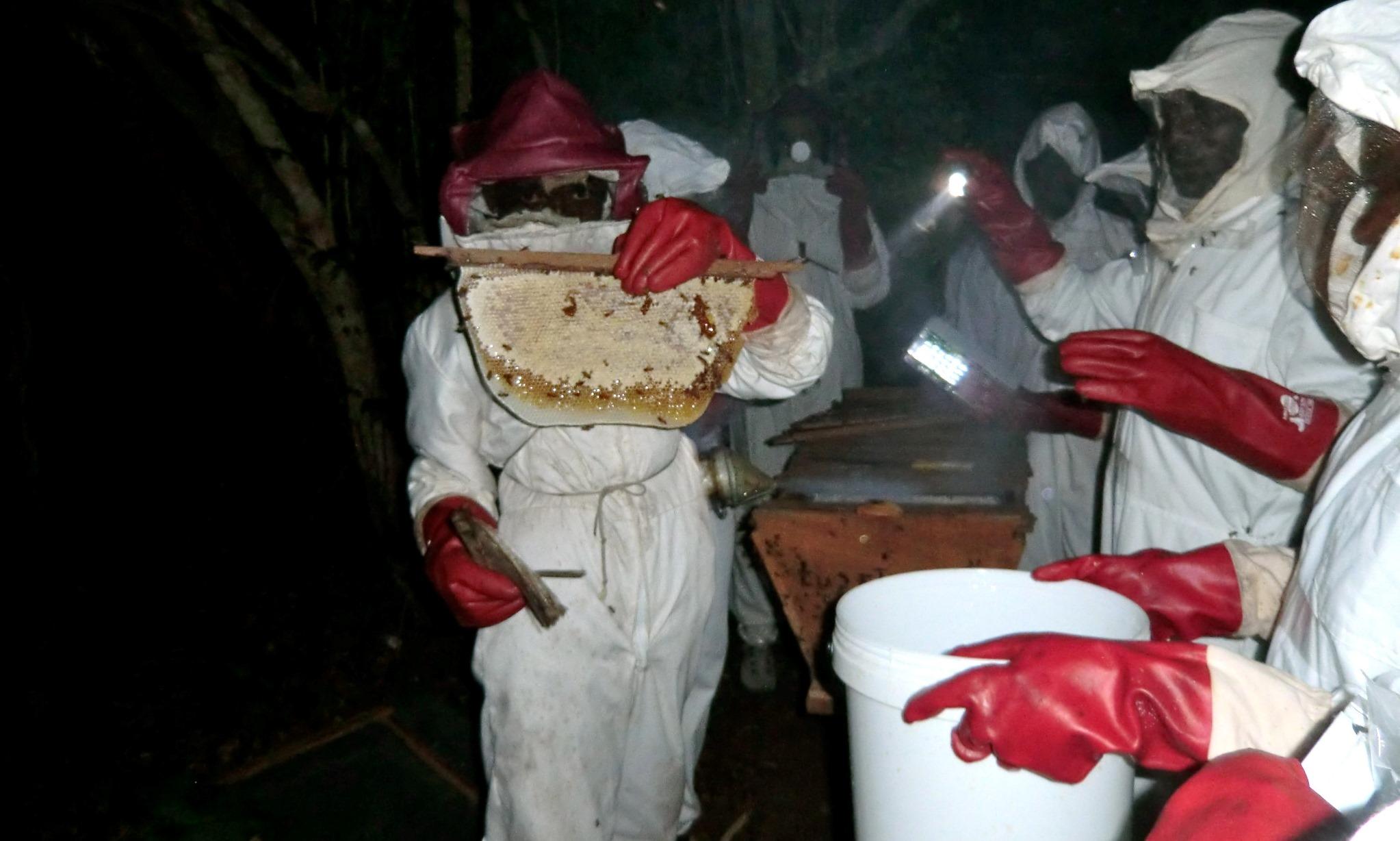 Assim como o manuseamento da colmeia e favos de mel  - As is good hive and combmanagement