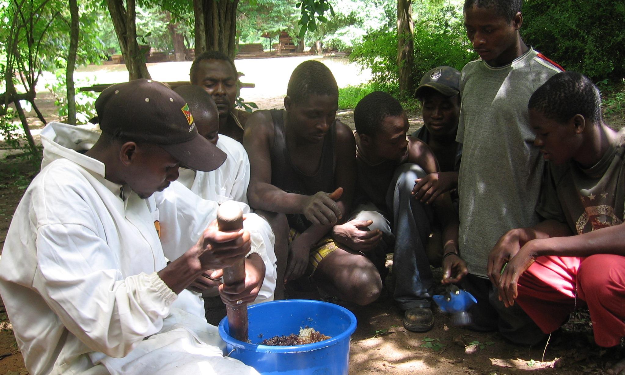 Higienização da colheita de mel dos favos e a sua preparação também são ensinadas  - Hygienic comb collection and preparation is taught