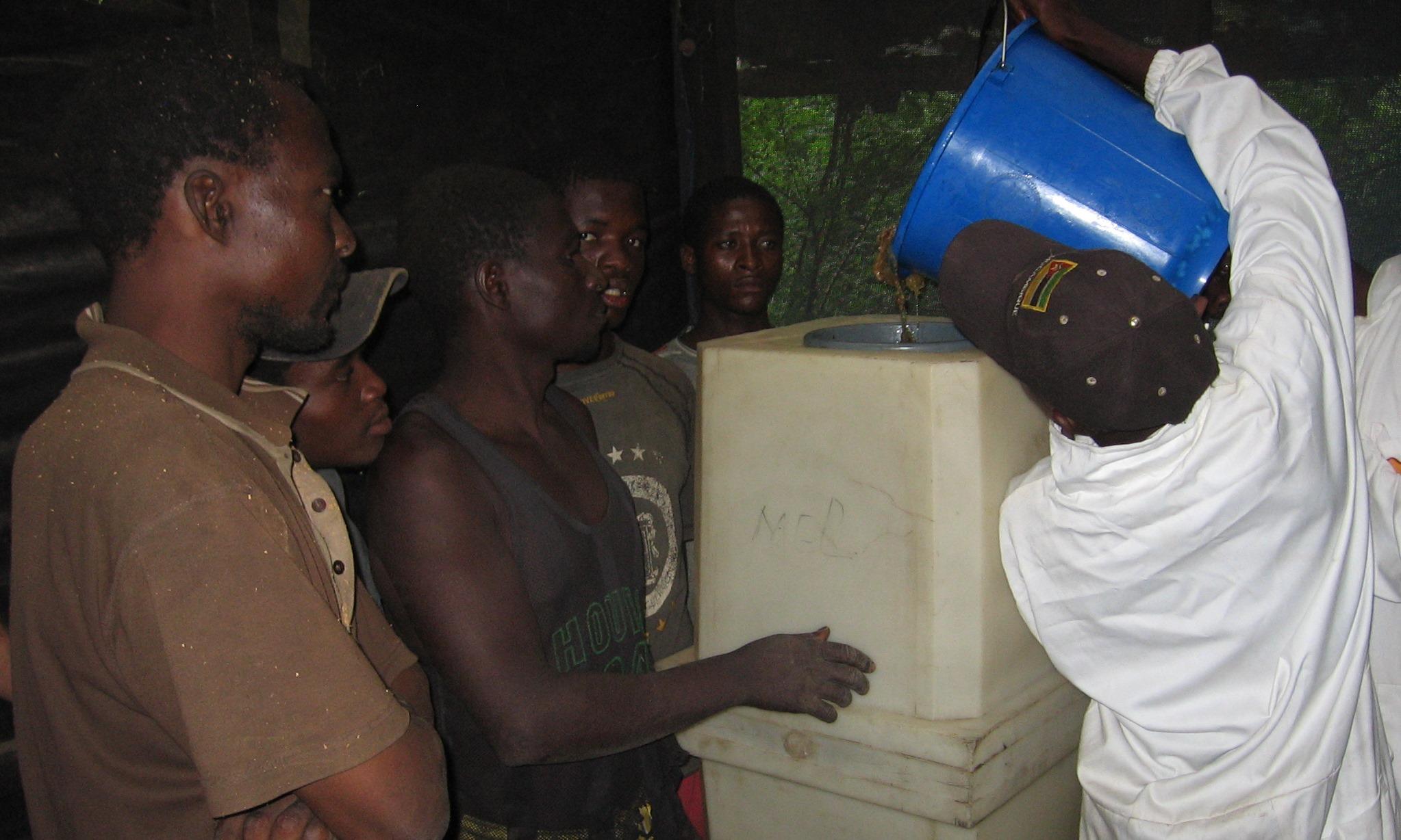 Assim como a extracção de mel  - As well as honey extraction