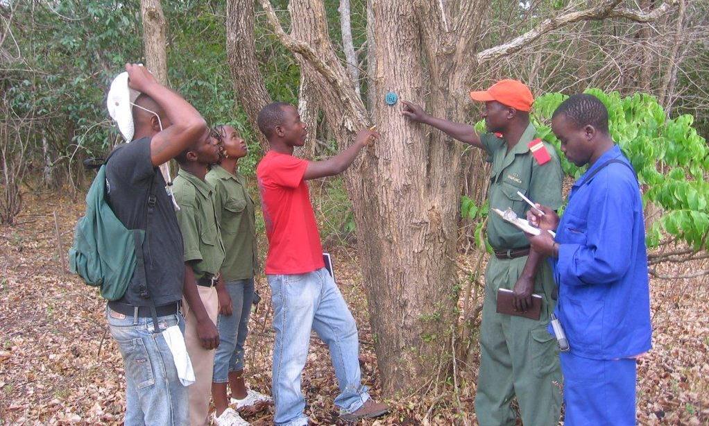 Identificação de árvores  -Teaching students tree identification