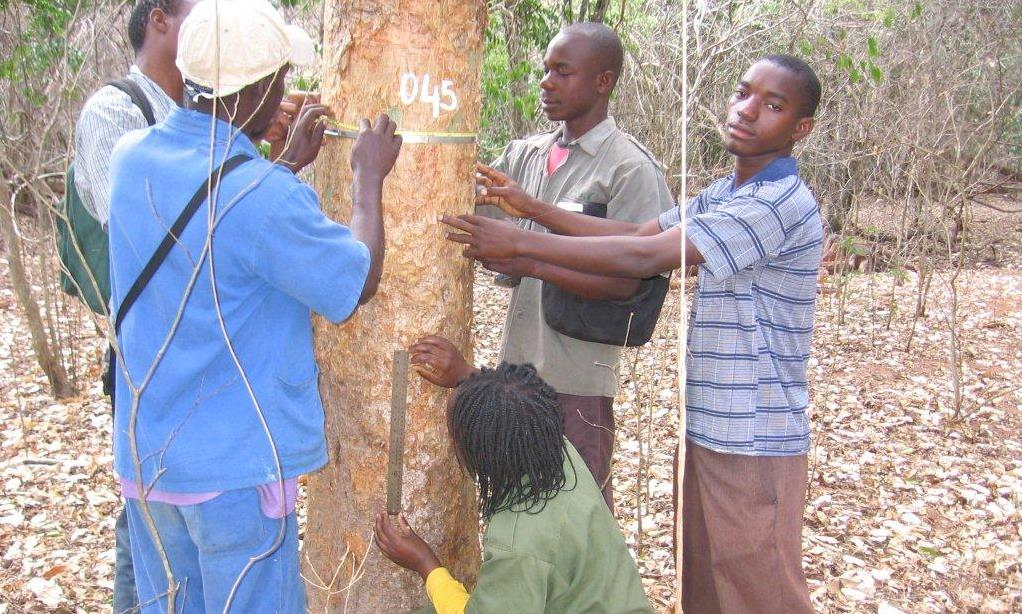 Inventário integrado florestal -Lessons in Integrated Forestry Inventories