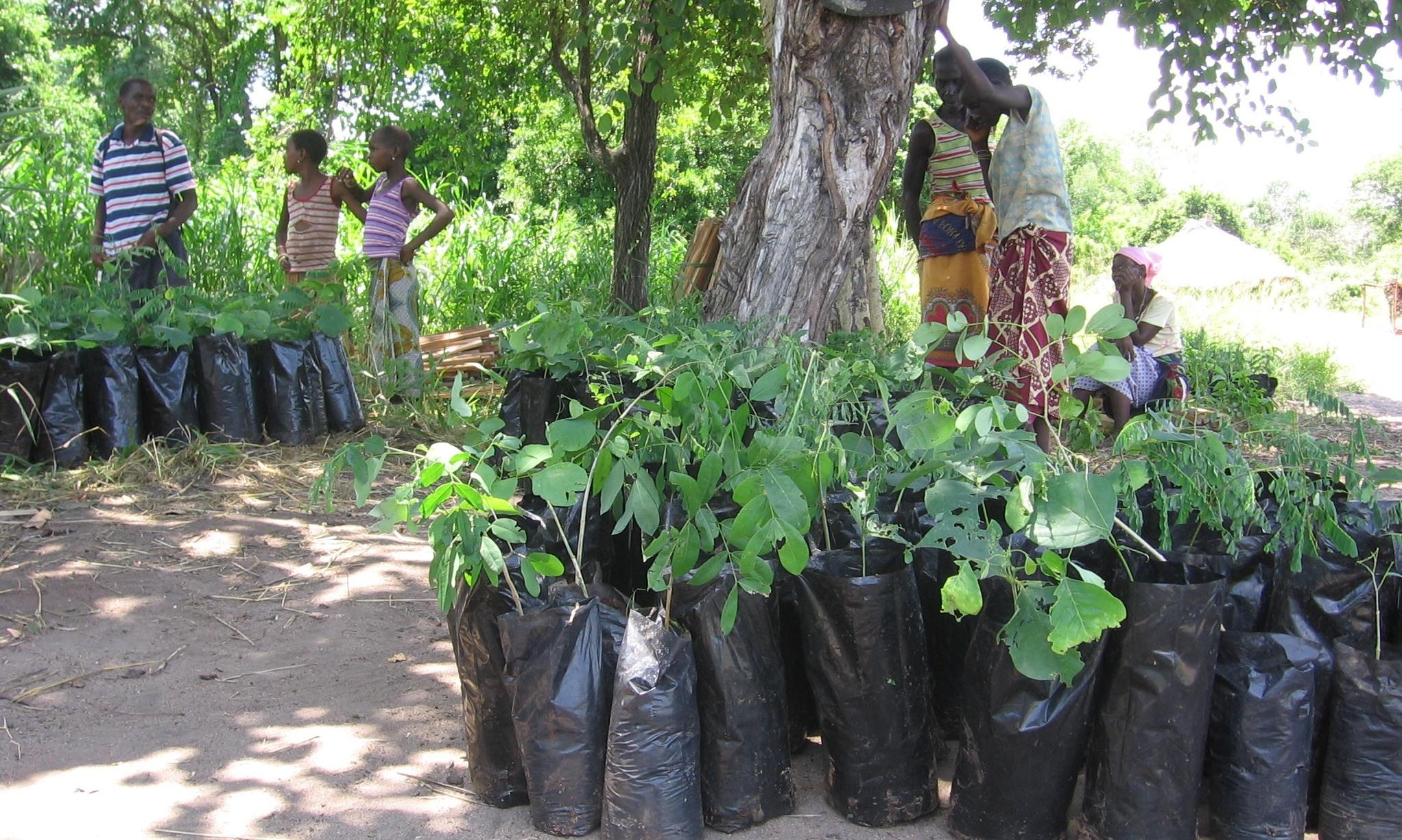 Árvores doadas  - Donated trees
