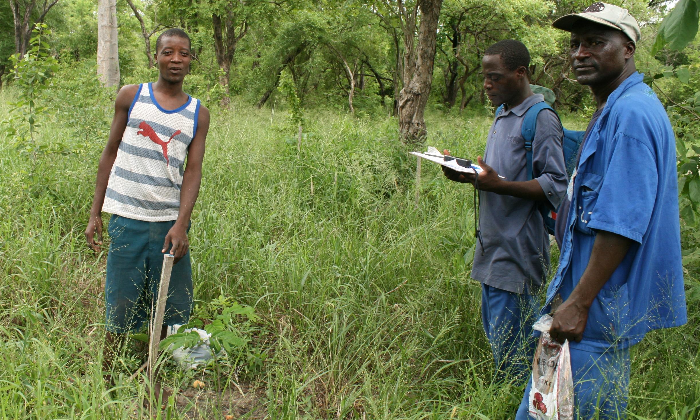 Inventário anual sobre os projectos de reflorestação da comunidade  - Annual inventory of community reforestation projects